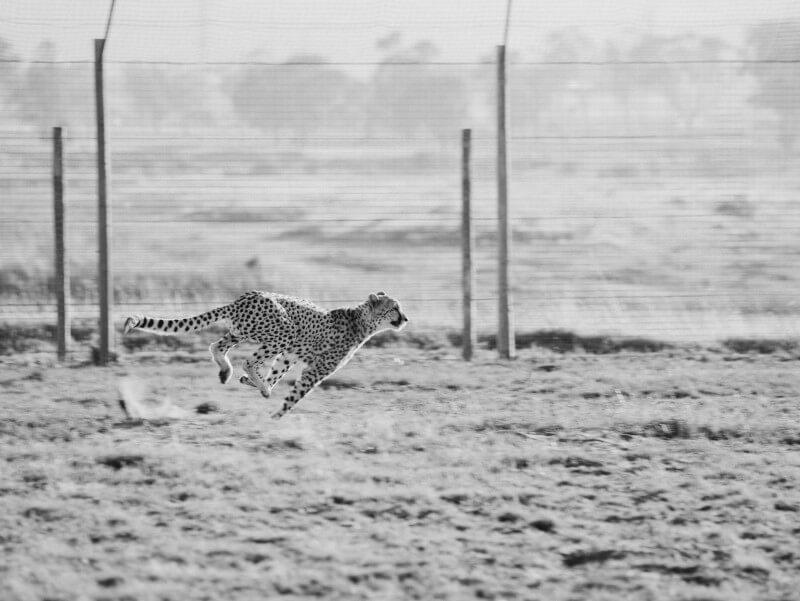 Make WordPress Faster (Cheetah Running)